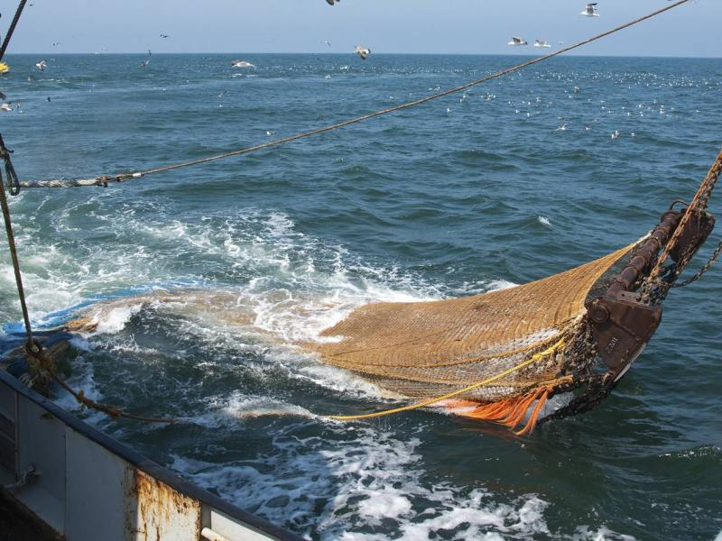 Socio-economic assessment of a 60% reduction in Viking fishing group's allocation in the inshore demersal trawl fishery.