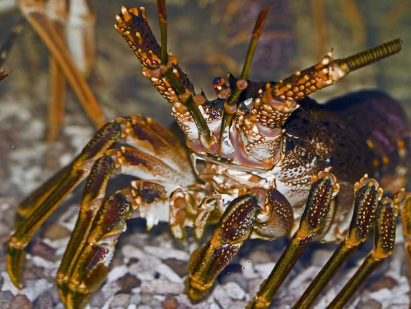 Assessment of catch and effort in the West Coast Rock Lobster recreational fishery
